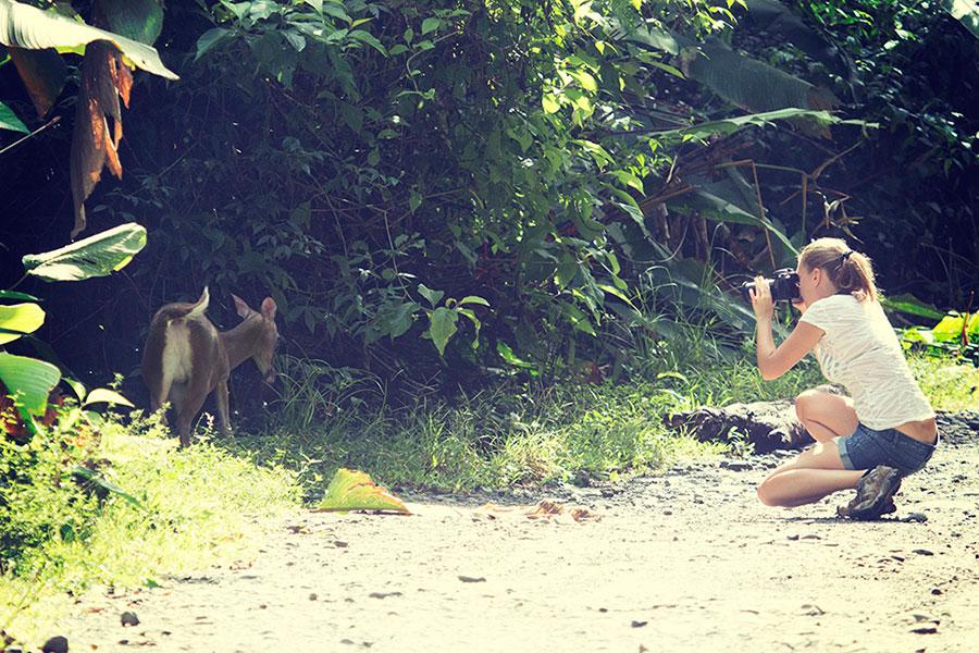 Manuel Antonio; Manuel Antonio Costa Rica; Mammals of Costa Rica; Costa Rica Nature and Wildlife