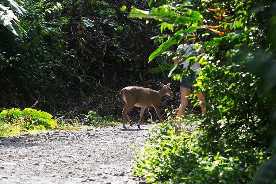 Manuel Antonio; Manuel Antonio Costa Rica; Mammals of Costa Rica; Costa Rica Nature and Wildlife